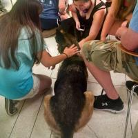 Students Relax with Dogs During Finals Week